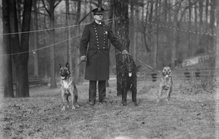 Policeman and Police Dogs
